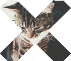cats-food
